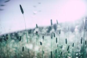 grass-828706_1920