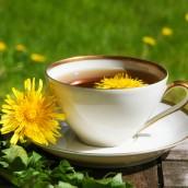 Herbata z mniszka i jej zalety