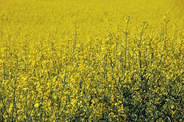Masz sceptyczne podejście gdy chodzi o stosowanie środków ochrony roślin?
