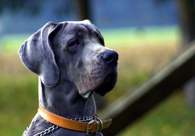 Chcesz mieć świetne pomysły na psy? Popatrz tutaj!